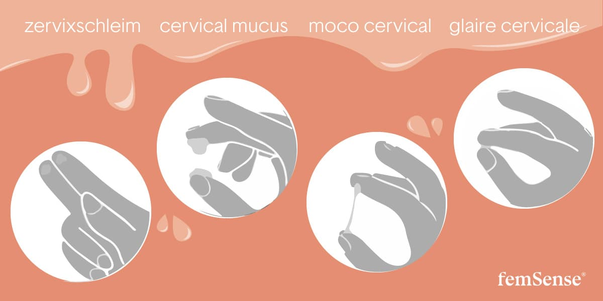 Graphic of 4 different cervical mucus textures